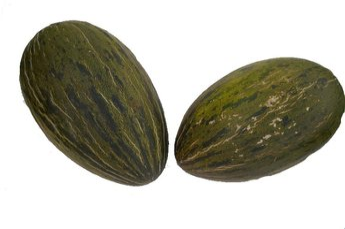 Meloun Piel de sapo