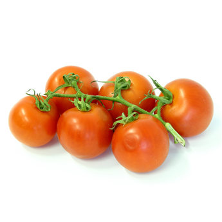 Rajčata keř
