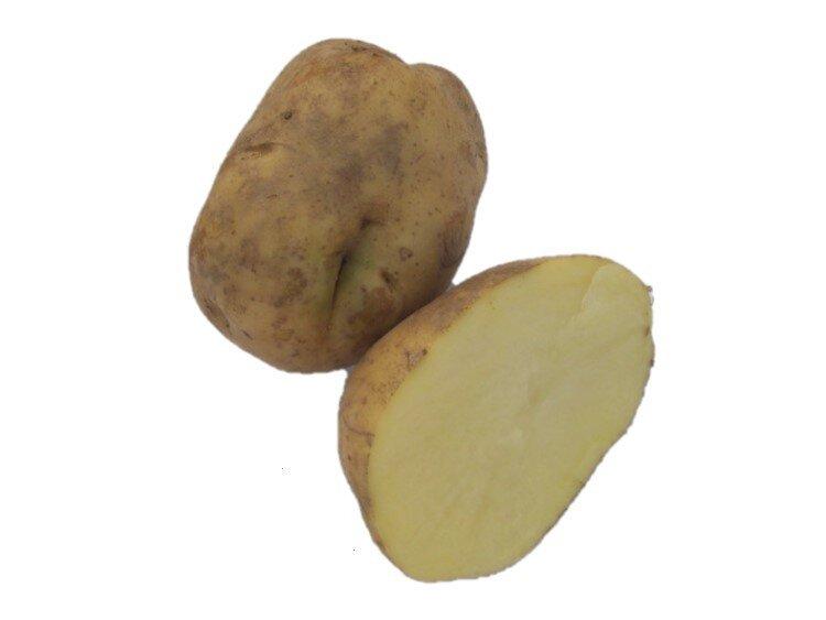 Paprika kapie