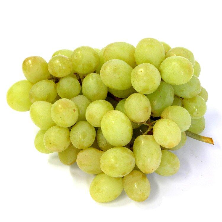 Paprika oranžová