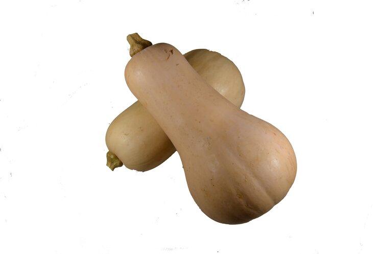 Rajčata mini - trost