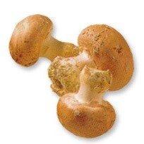 Rajčata na větvičce